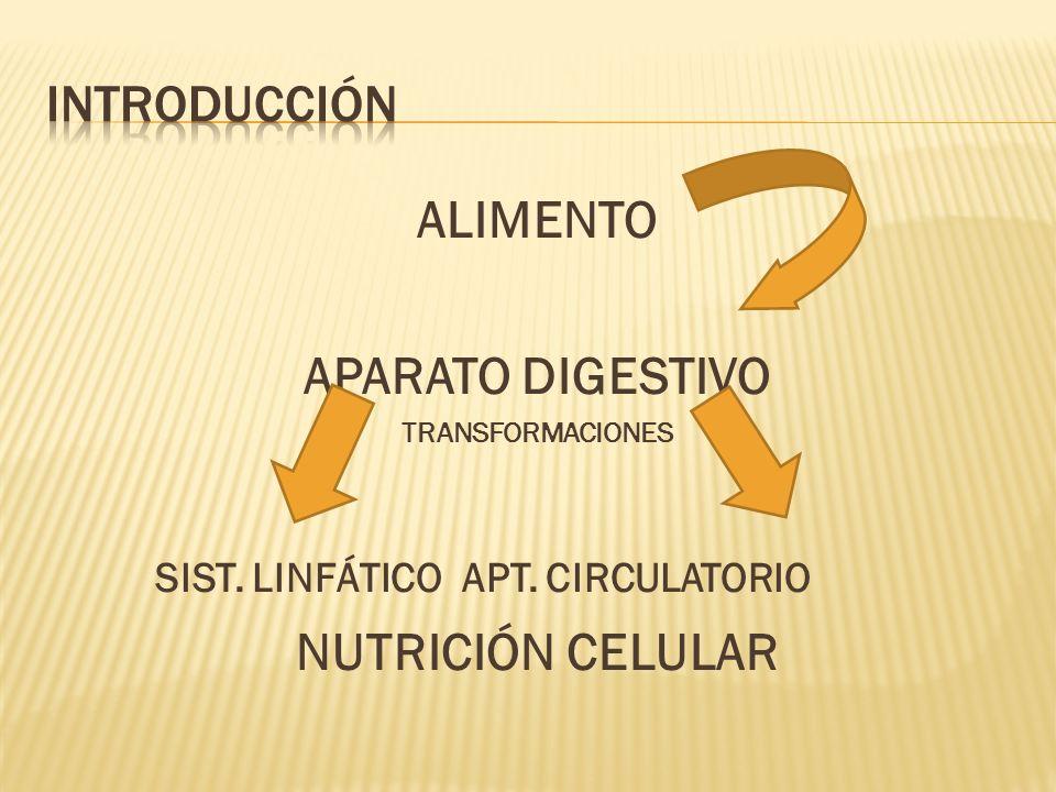 ALIMENTO APARATO DIGESTIVO NUTRICIÓN CELULAR