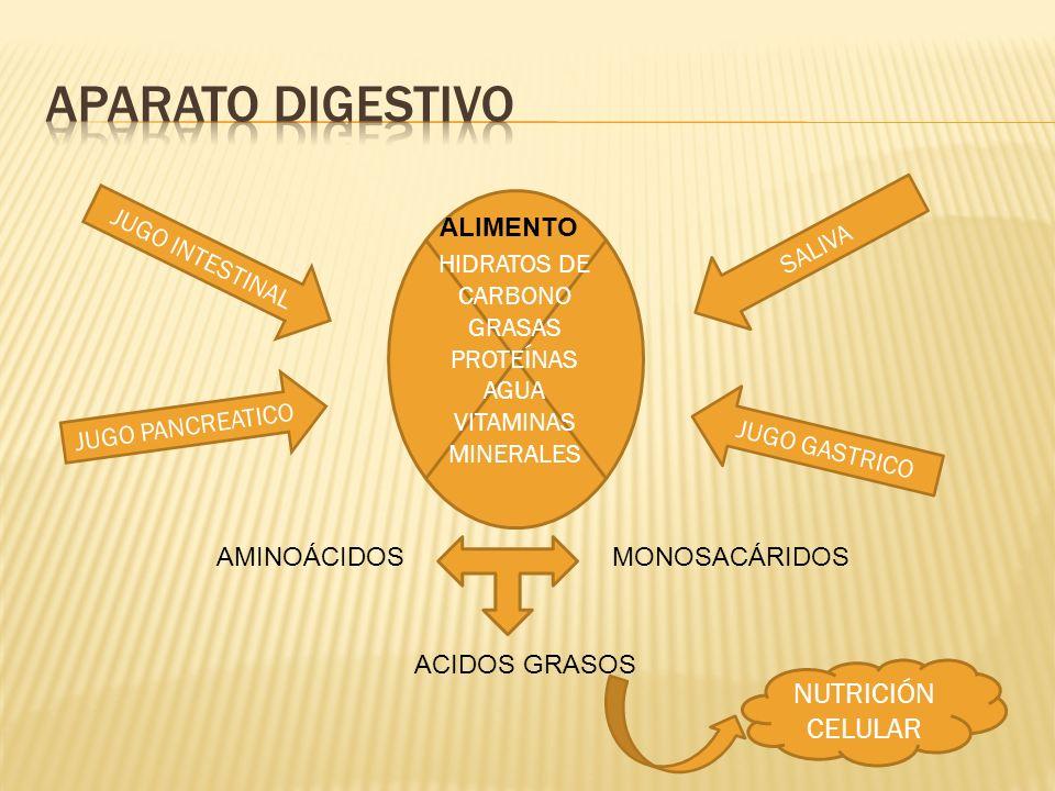 APARATO DIGESTIVO NUTRICIÓN CELULAR HIDRATOS DE CARBONO GRASAS