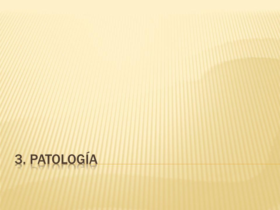 3. patología