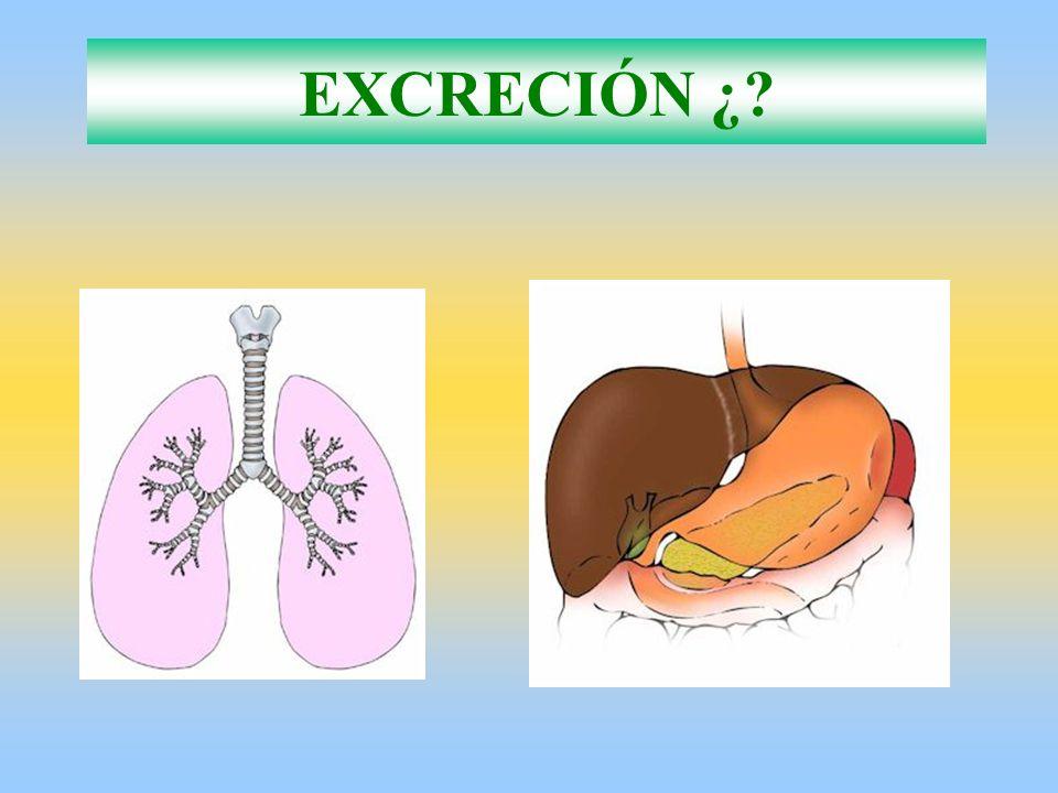 EXCRECIÓN ¿