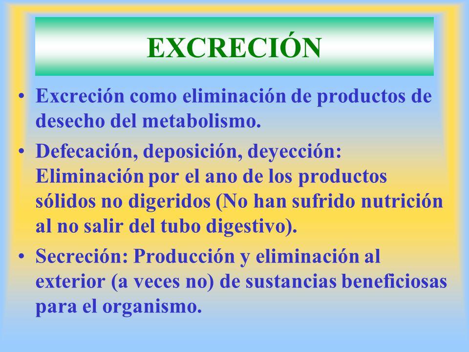EXCRECIÓN Excreción como eliminación de productos de desecho del metabolismo.
