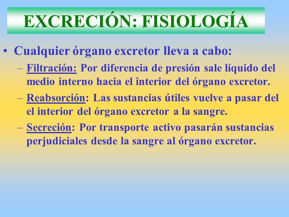 EXCRECIÓN: FISIOLOGÍA