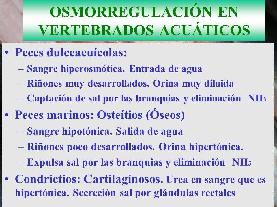 OSMORREGULACIÓN EN VERTEBRADOS ACUÁTICOS
