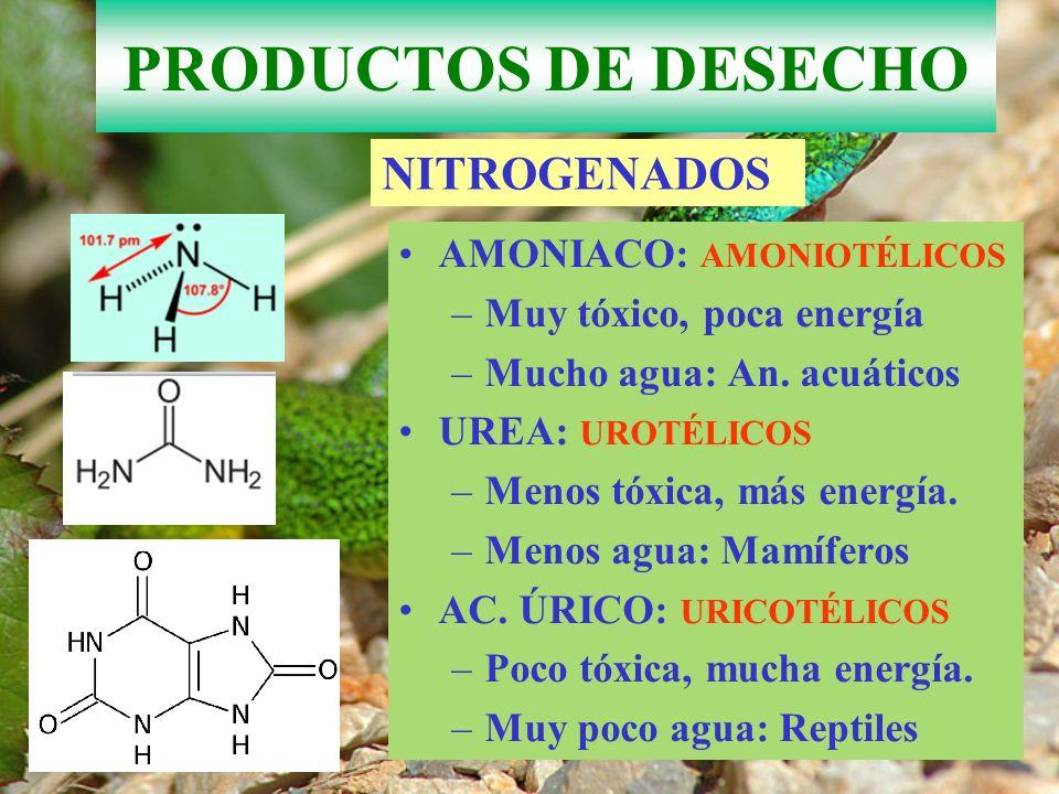 PRODUCTOS DE DESECHO NITROGENADOS AMONIACO: AMONIOTÉLICOS