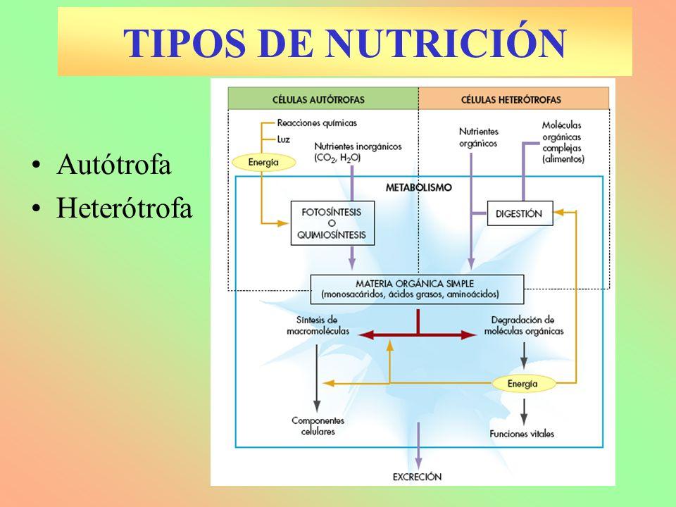 TIPOS DE NUTRICIÓN Autótrofa Heterótrofa