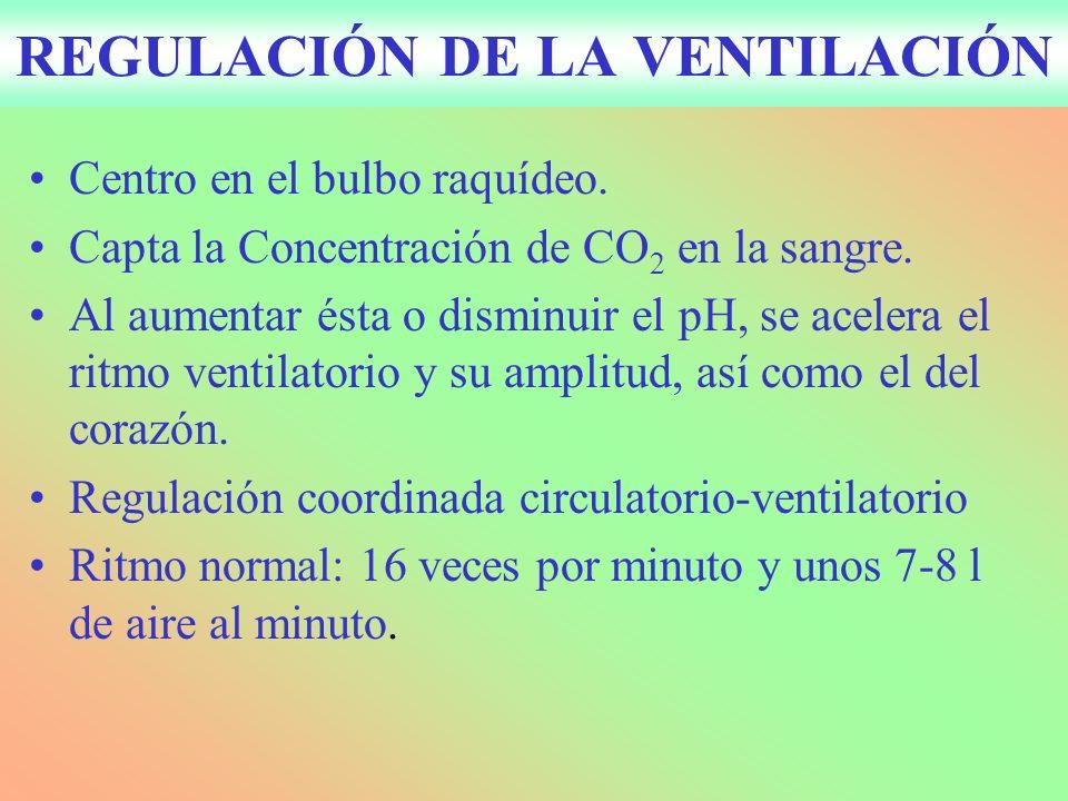 REGULACIÓN DE LA VENTILACIÓN
