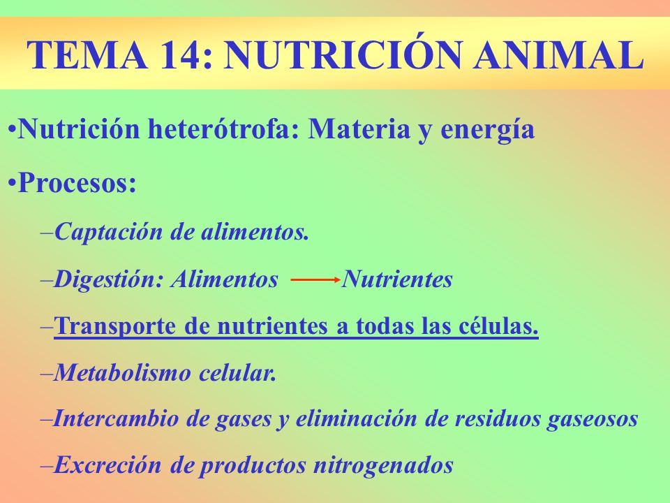 TEMA 14: NUTRICIÓN ANIMAL