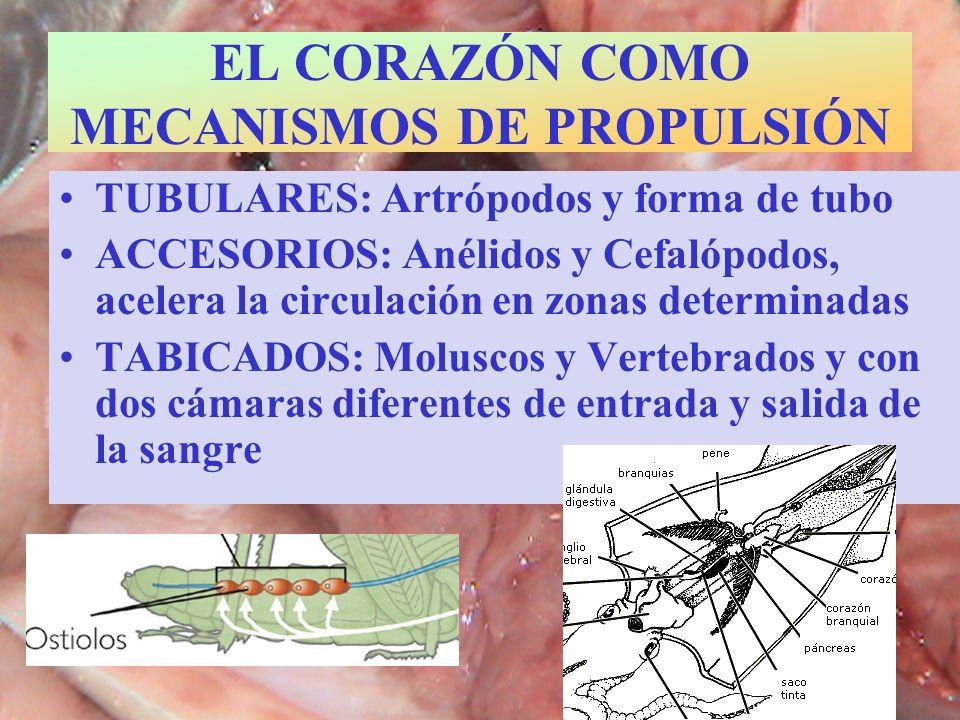 EL CORAZÓN COMO MECANISMOS DE PROPULSIÓN