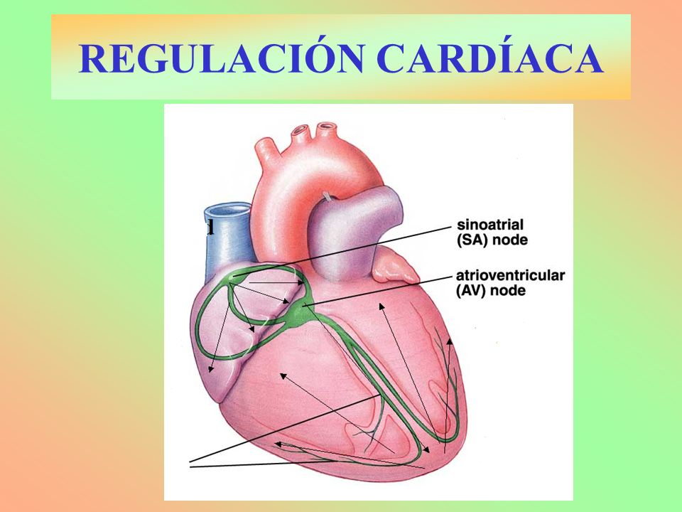 REGULACIÓN CARDÍACA