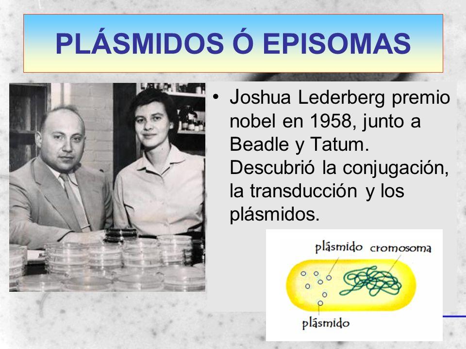 PLÁSMIDOS Ó EPISOMAS Joshua Lederberg premio nobel en 1958, junto a Beadle y Tatum.