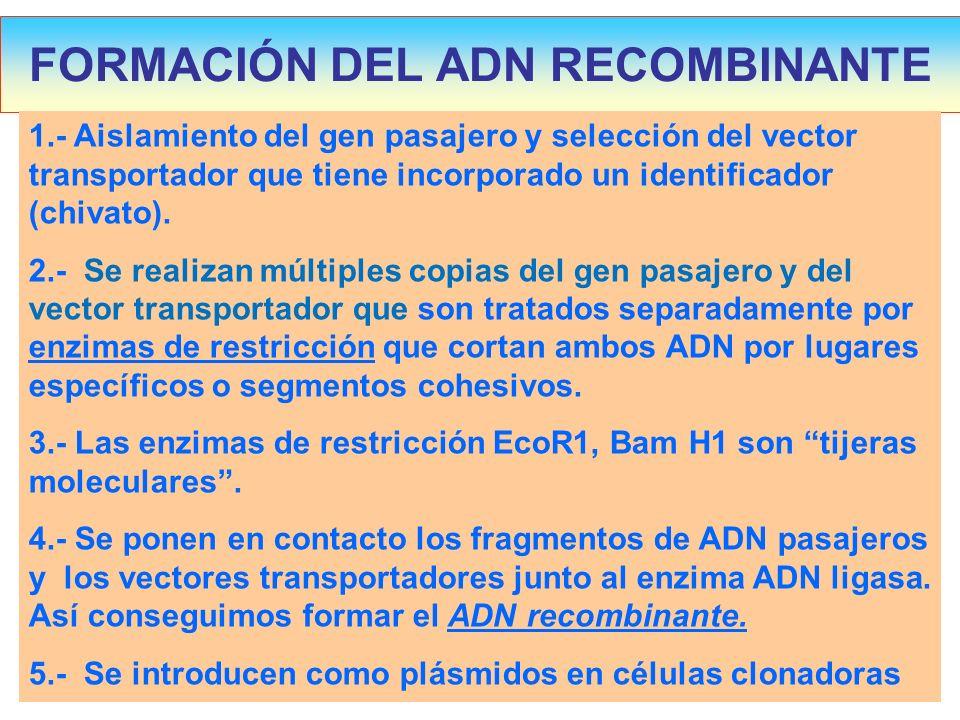 FORMACIÓN DEL ADN RECOMBINANTE