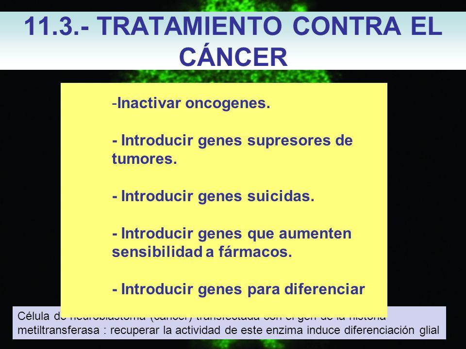 11.3.- TRATAMIENTO CONTRA EL CÁNCER