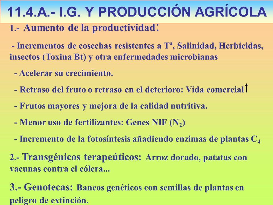 11.4.A.- I.G. Y PRODUCCIÓN AGRÍCOLA