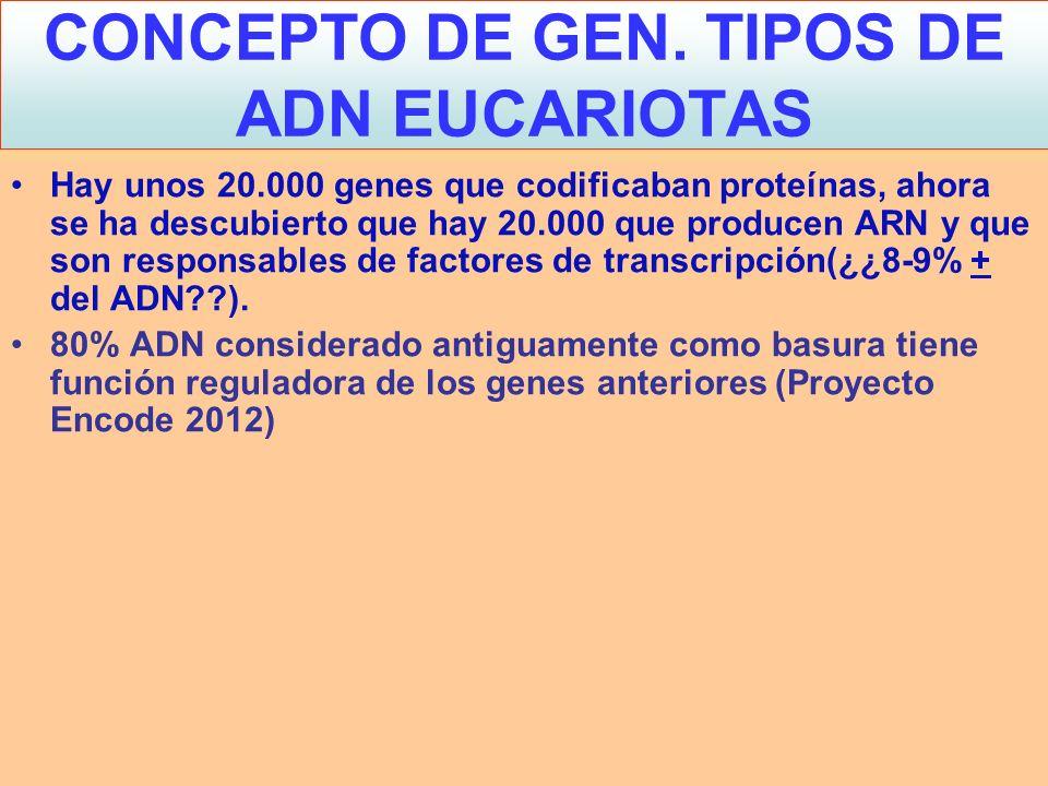 CONCEPTO DE GEN. TIPOS DE ADN EUCARIOTAS