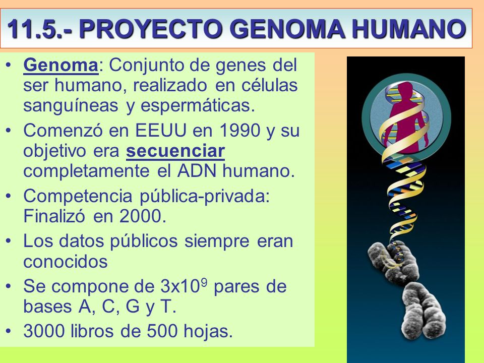 11.5.- PROYECTO GENOMA HUMANO