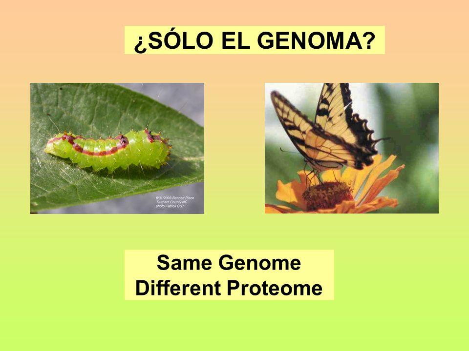 ¿SÓLO EL GENOMA Same Genome Different Proteome