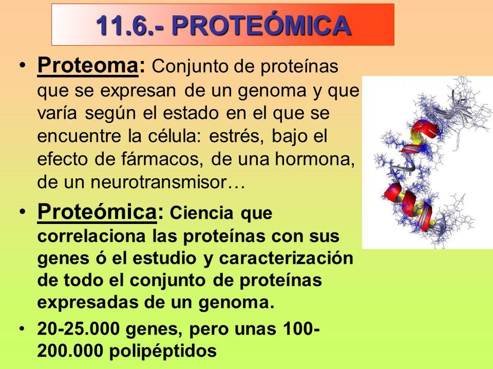 11.6.- PROTEÓMICA