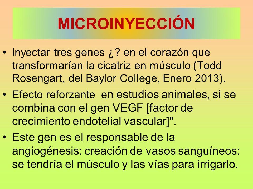 MICROINYECCIÓN Inyectar tres genes ¿ en el corazón que transformarían la cicatriz en músculo (Todd Rosengart, del Baylor College, Enero 2013).
