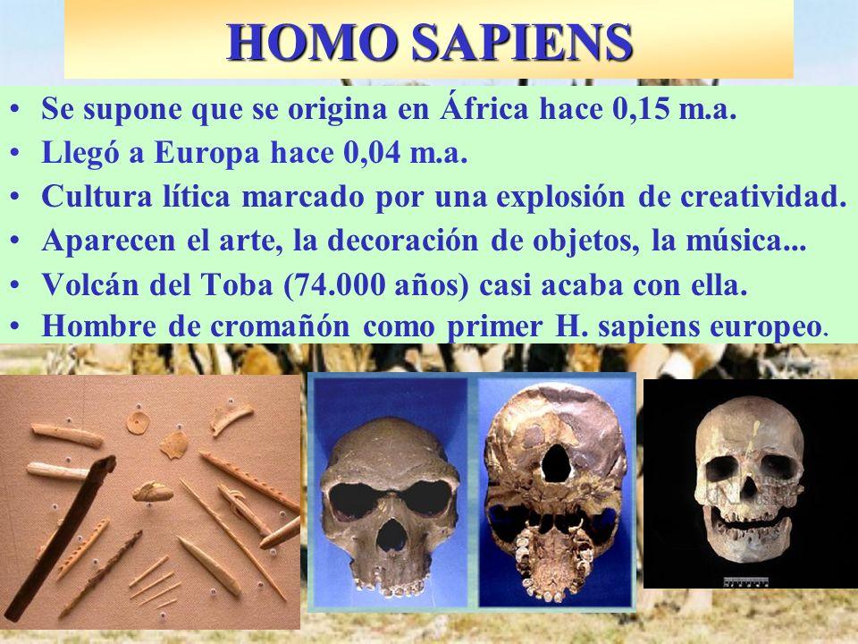 HOMO SAPIENS Se supone que se origina en África hace 0,15 m.a.