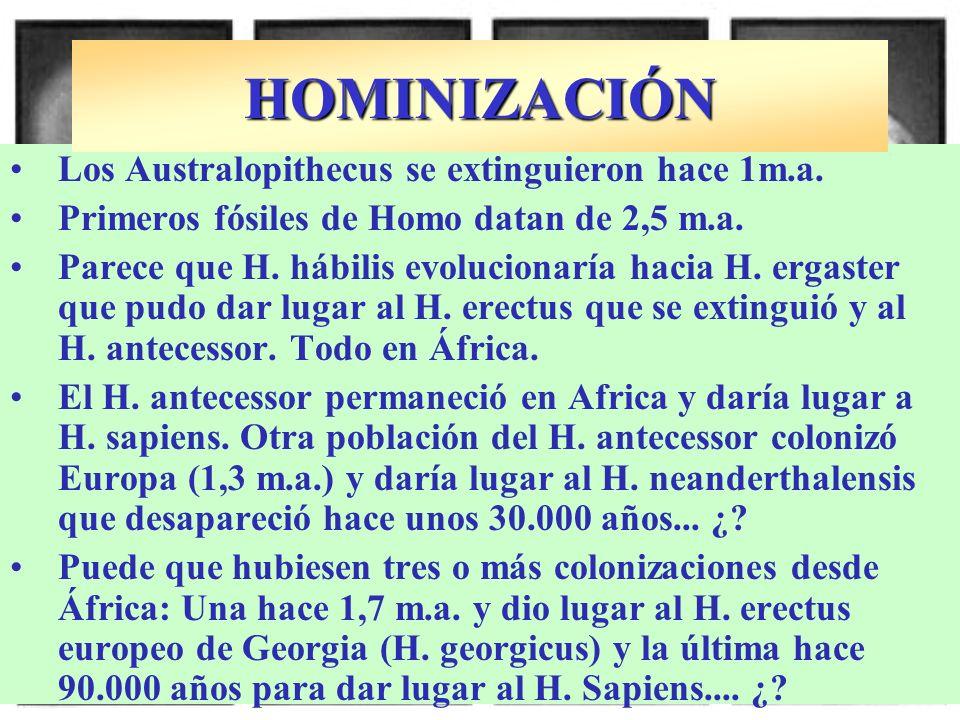 HOMINIZACIÓN Los Australopithecus se extinguieron hace 1m.a.