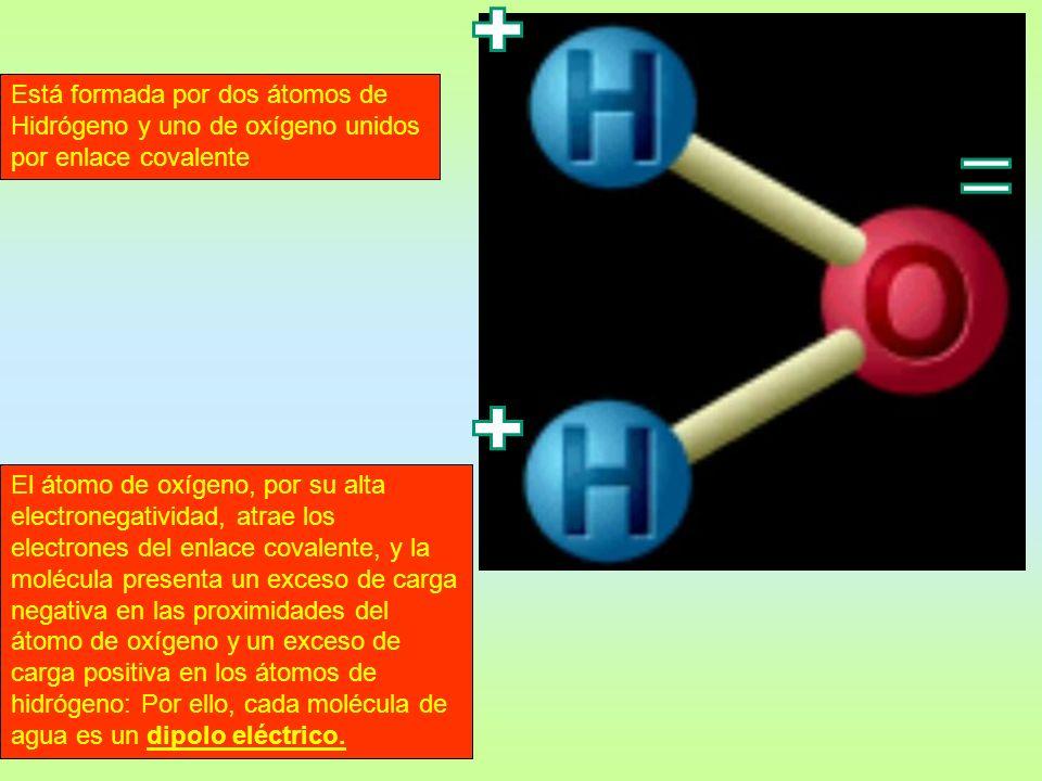 Está formada por dos átomos de Hidrógeno y uno de oxígeno unidos por enlace covalente