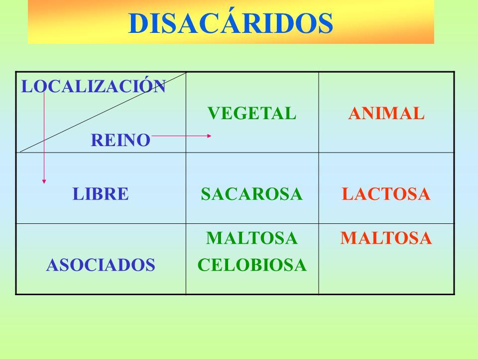 DISACÁRIDOS LOCALIZACIÓN REINO VEGETAL ANIMAL LIBRE SACAROSA LACTOSA