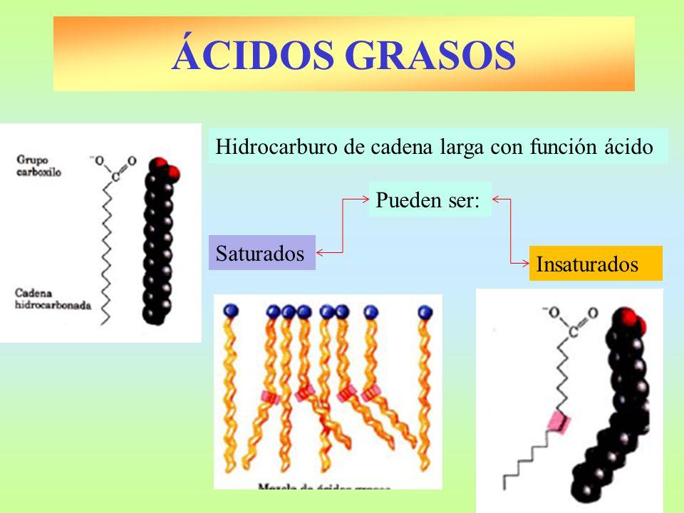 ÁCIDOS GRASOS Hidrocarburo de cadena larga con función ácido