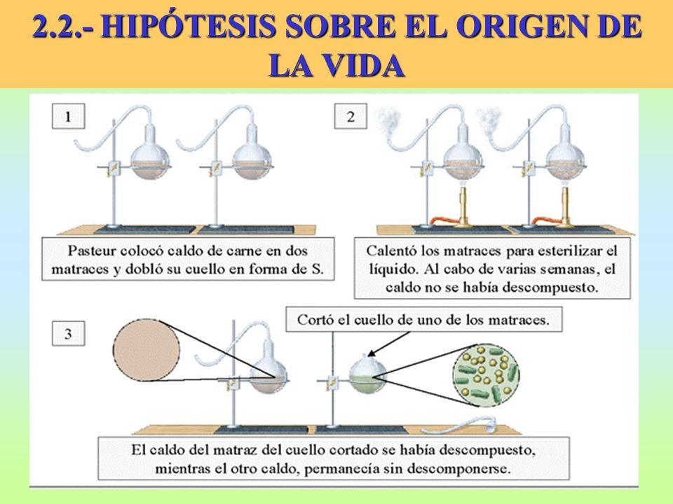 2.2.- HIPÓTESIS SOBRE EL ORIGEN DE LA VIDA