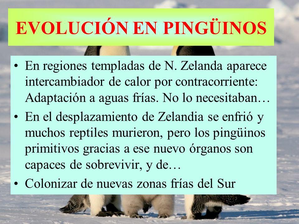EVOLUCIÓN EN PINGÜINOS