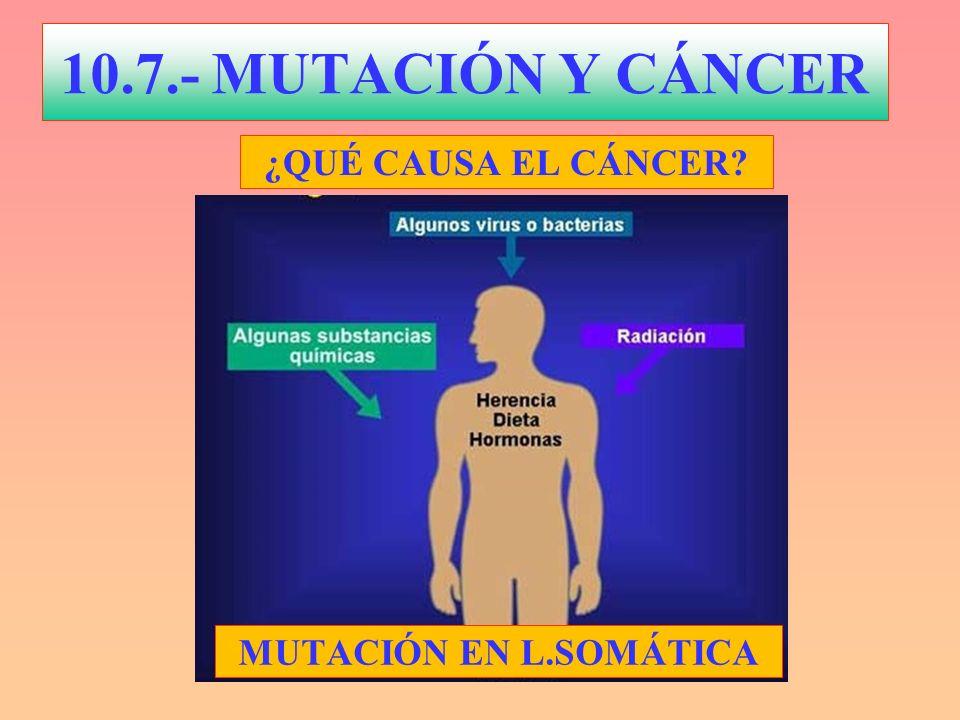 10.7.- MUTACIÓN Y CÁNCER ¿QUÉ CAUSA EL CÁNCER MUTACIÓN EN L.SOMÁTICA