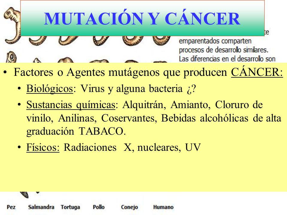 MUTACIÓN Y CÁNCER Factores o Agentes mutágenos que producen CÁNCER: