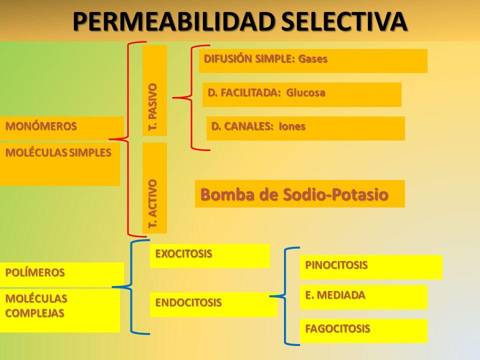 PERMEABILIDAD SELECTIVA