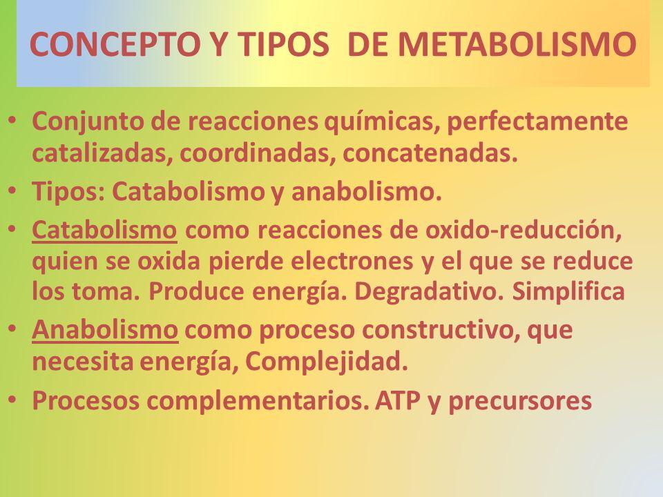 CONCEPTO Y TIPOS DE METABOLISMO