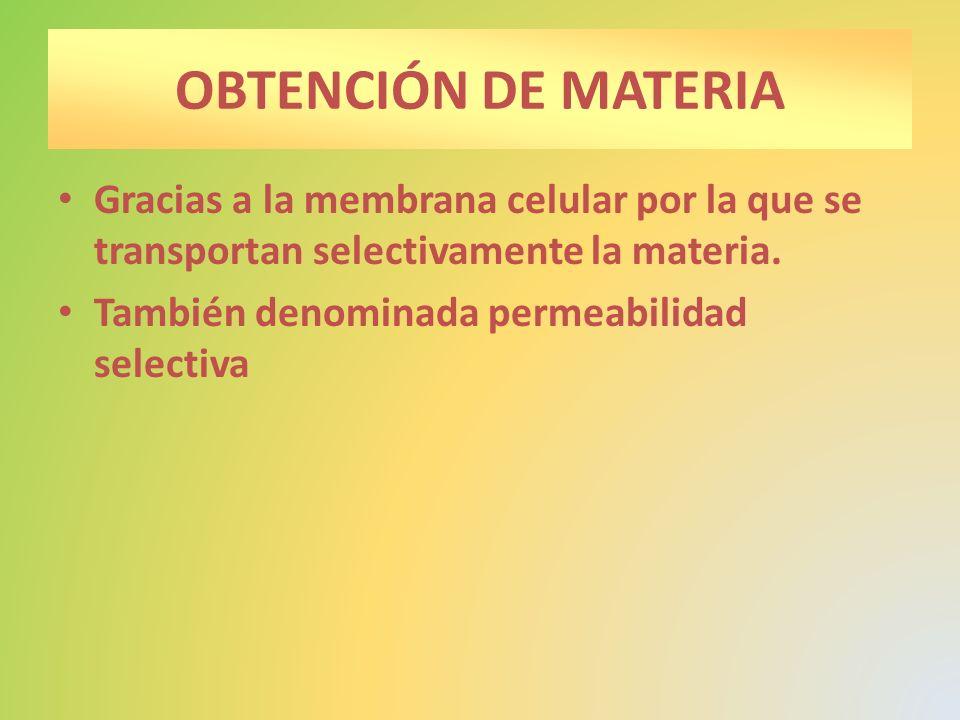 OBTENCIÓN DE MATERIA Gracias a la membrana celular por la que se transportan selectivamente la materia.