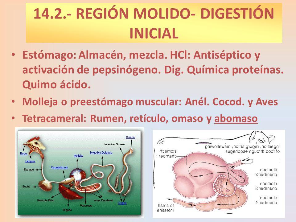 14.2.- REGIÓN MOLIDO- DIGESTIÓN INICIAL