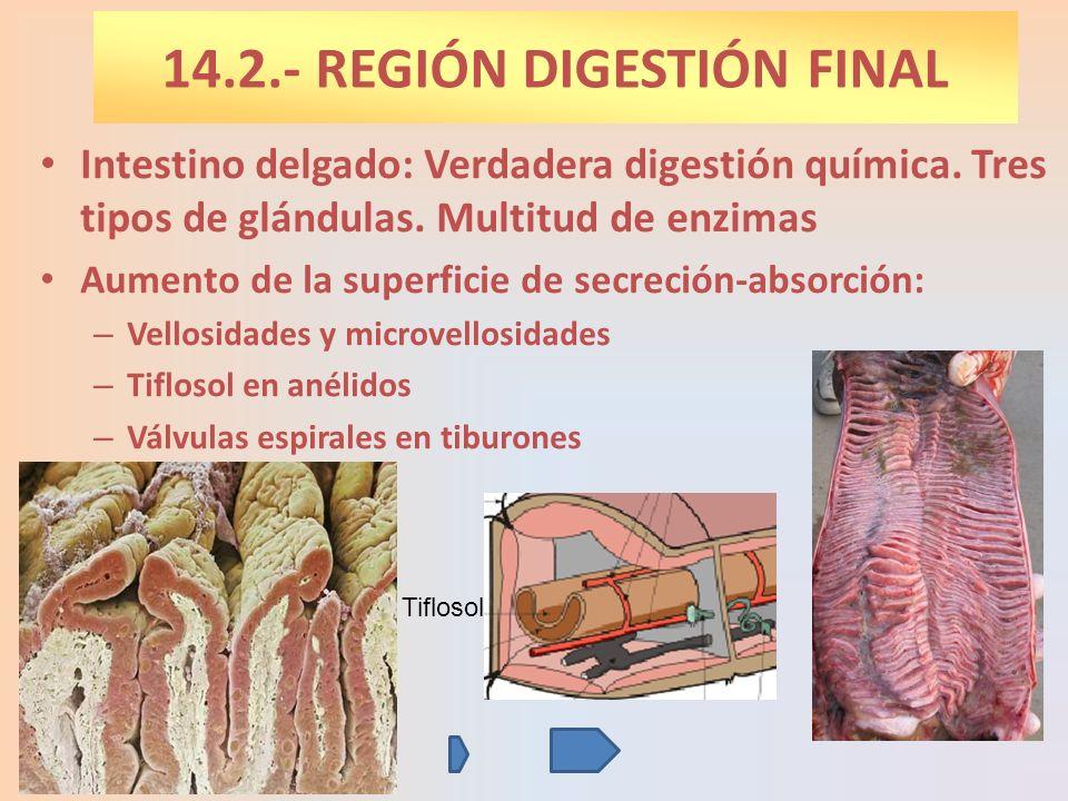 14.2.- REGIÓN DIGESTIÓN FINAL