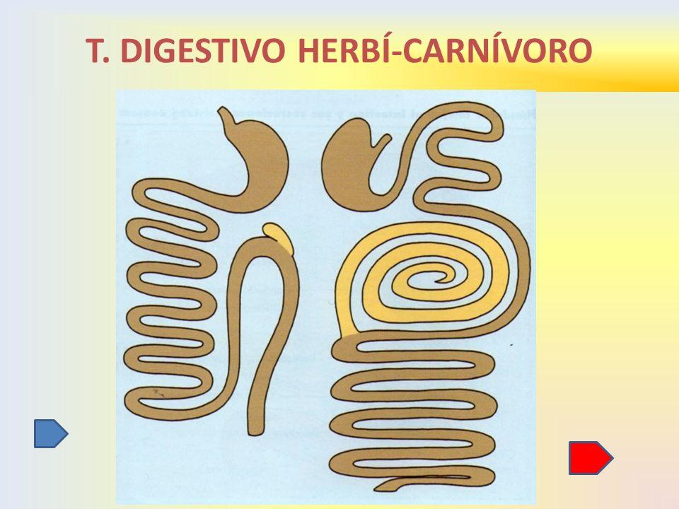 T. DIGESTIVO HERBÍ-CARNÍVORO