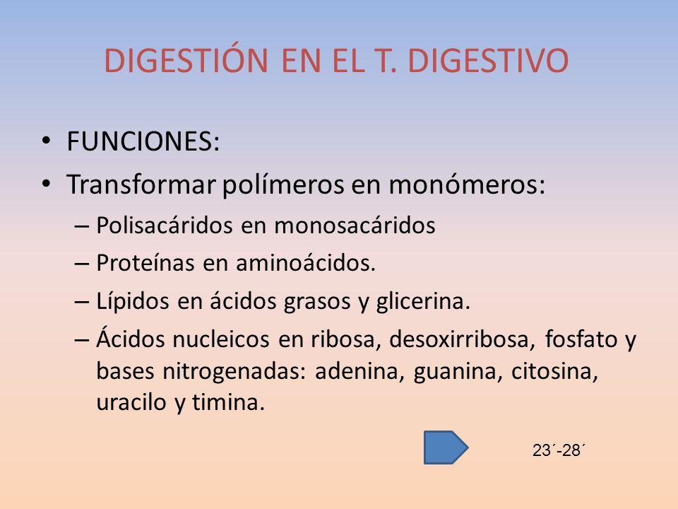 DIGESTIÓN EN EL T. DIGESTIVO