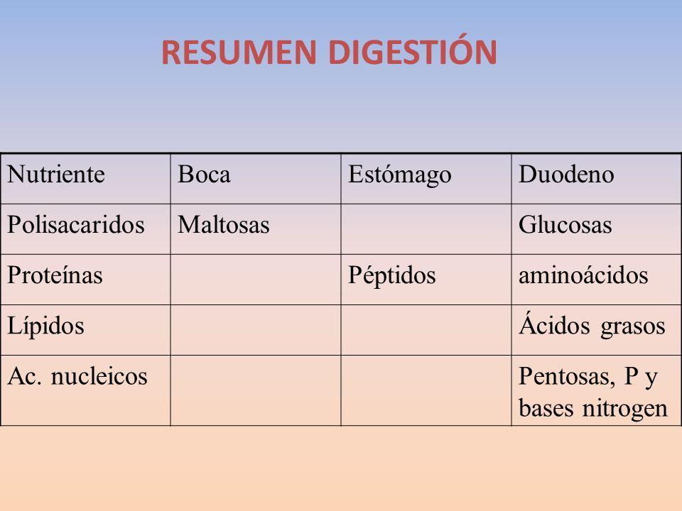 RESUMEN DIGESTIÓN Nutriente Boca Estómago Duodeno Polisacaridos