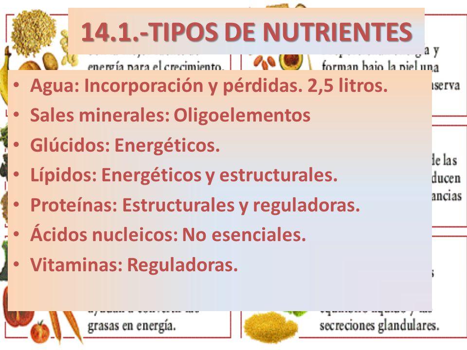 14.1.-TIPOS DE NUTRIENTES Agua: Incorporación y pérdidas. 2,5 litros.