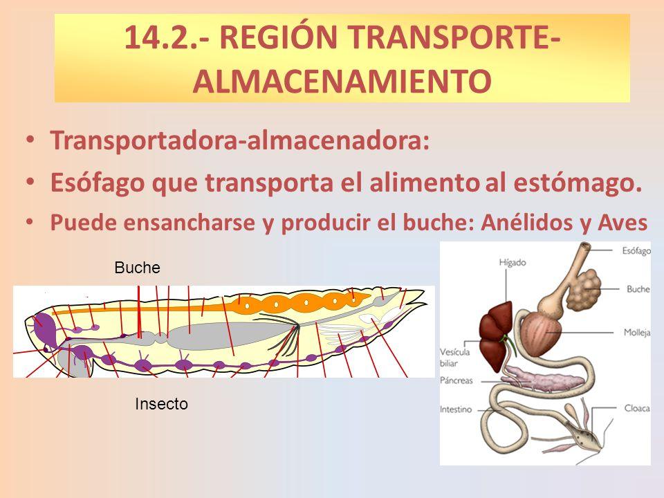 14.2.- REGIÓN TRANSPORTE- ALMACENAMIENTO