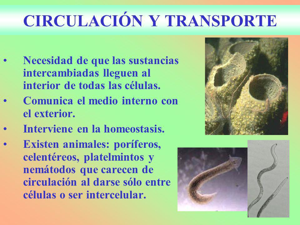 CIRCULACIÓN Y TRANSPORTE