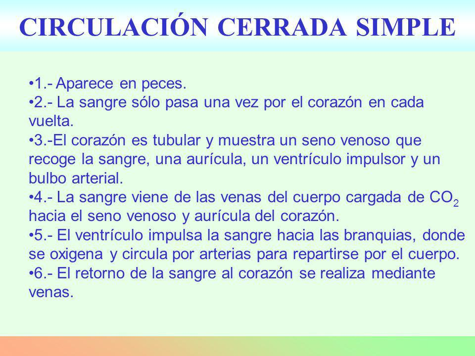 CIRCULACIÓN CERRADA SIMPLE