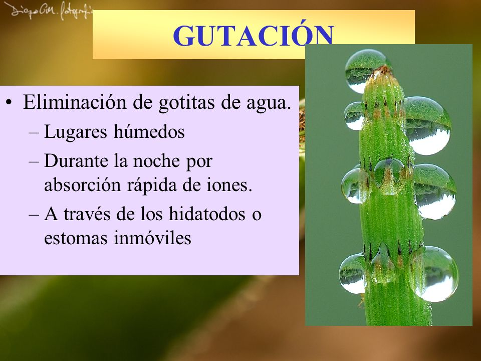 GUTACIÓN Eliminación de gotitas de agua. Lugares húmedos
