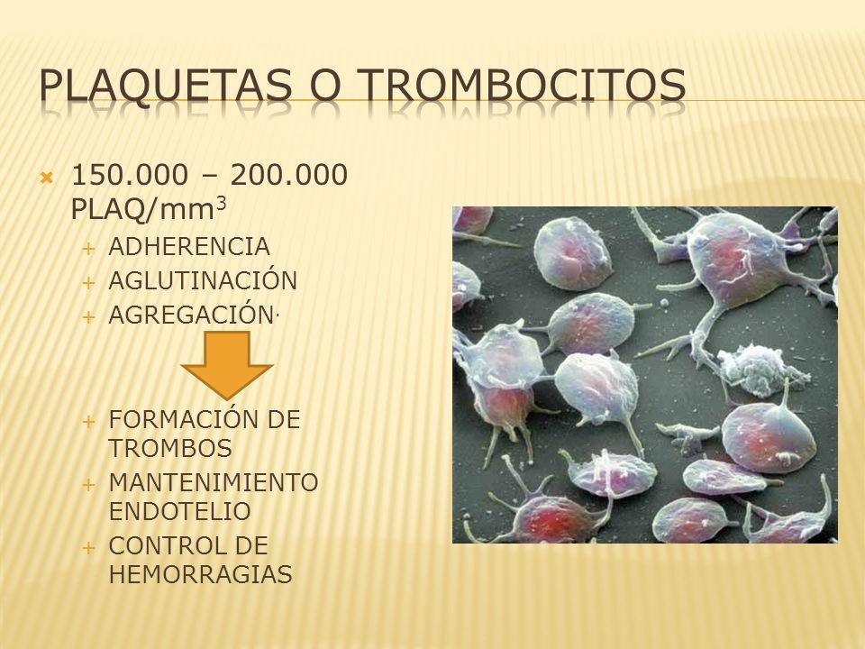 PLAQUETAS O TROMBOCITOS