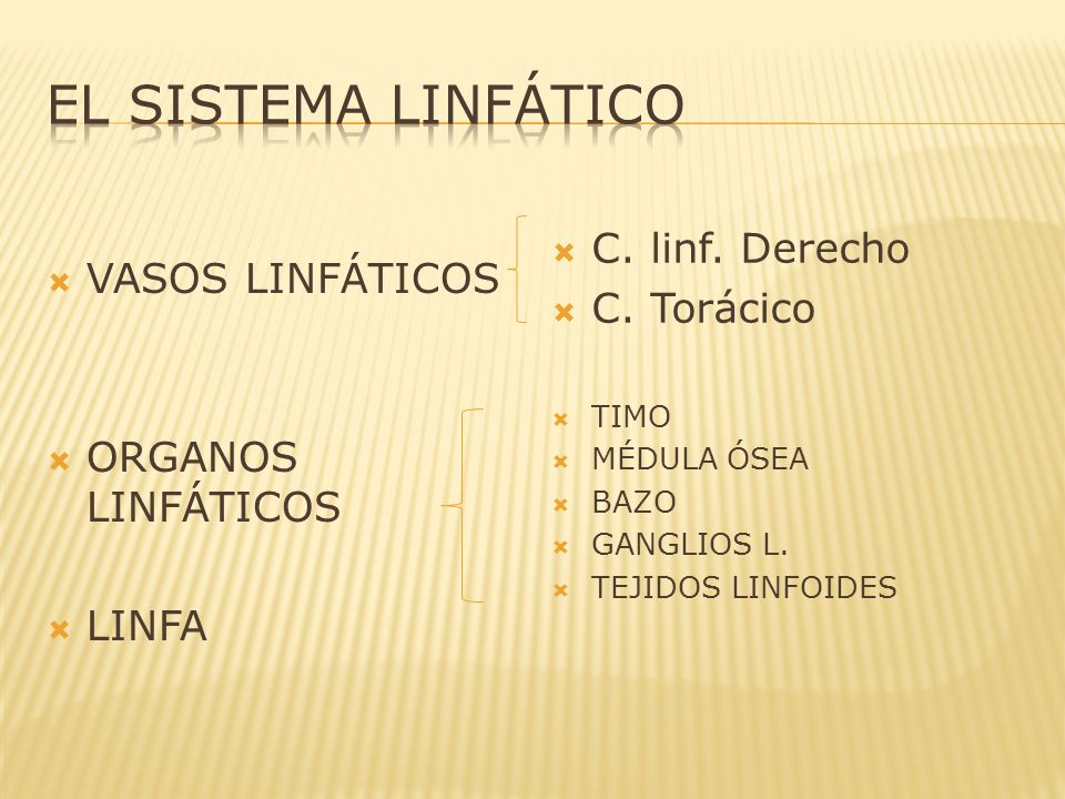 EL SISTEMA LINFÁTICO C. linf. Derecho C. Torácico VASOS LINFÁTICOS