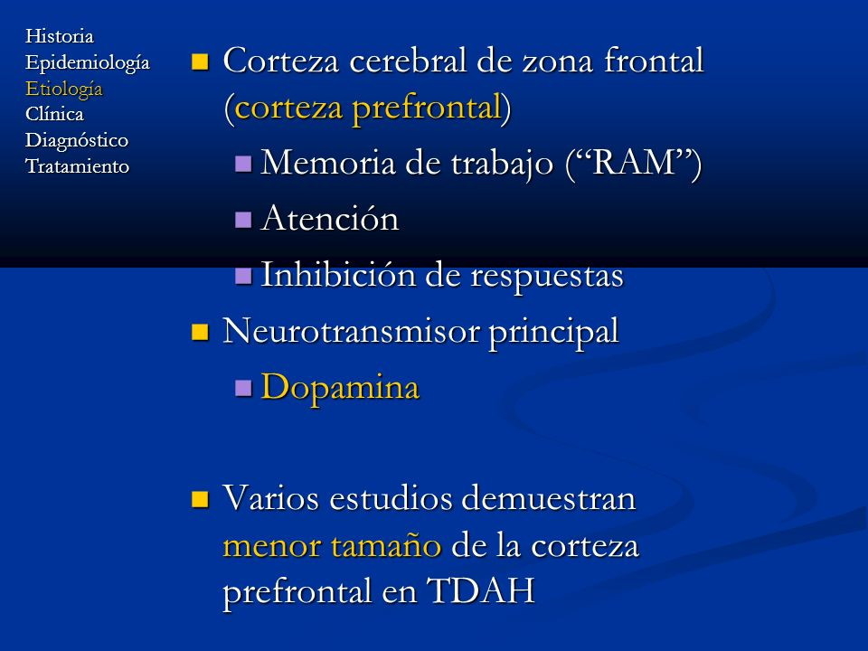 Corteza cerebral de zona frontal (corteza prefrontal)
