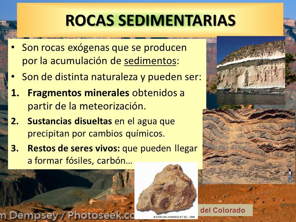 ROCAS SEDIMENTARIAS Son rocas exógenas que se producen por la acumulación de sedimentos: Son de distinta naturaleza y pueden ser: