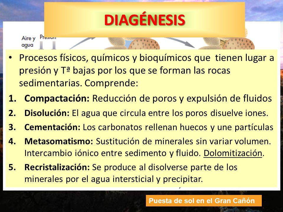 DIAGÉNESIS Procesos físicos, químicos y bioquímicos que tienen lugar a presión y Tª bajas por los que se forman las rocas sedimentarias. Comprende: