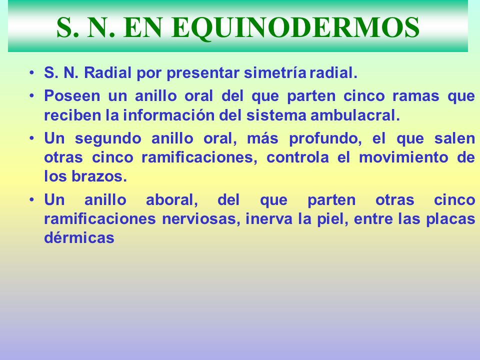S. N. EN EQUINODERMOS S. N. Radial por presentar simetría radial.